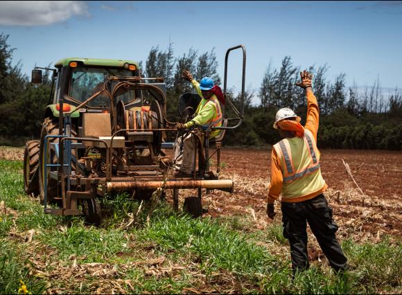 Federal Judge Strikes Down Maui County's GMO Farming Moratorium