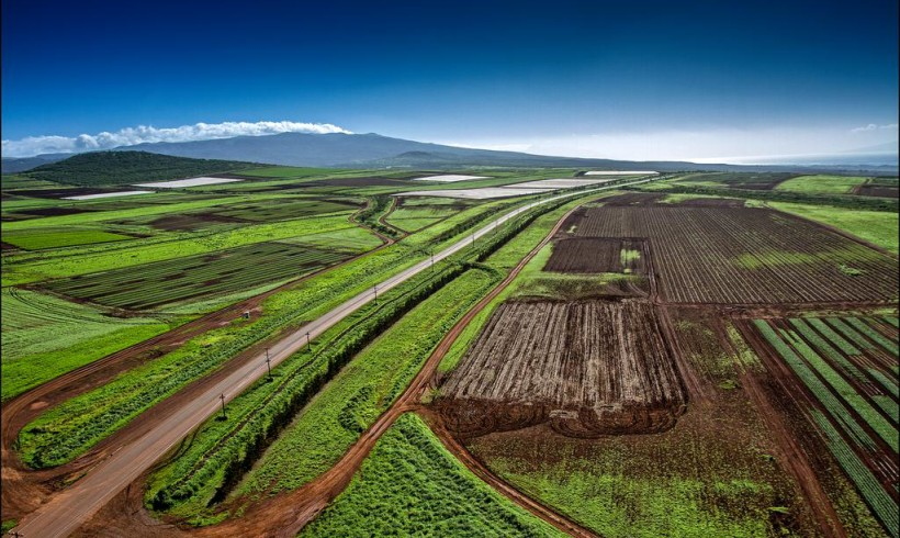 Hawaii's Trifecta of GMO Cases May Be Heard By Appeals Court In June