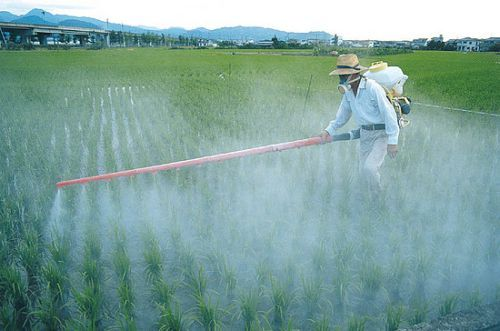 Restrictions on glyphosate use across the EU come into force today.