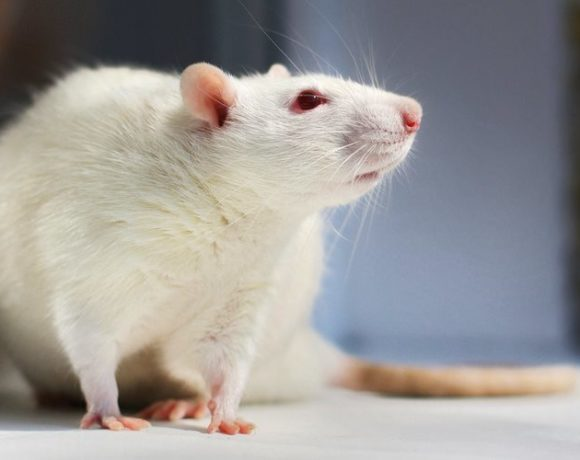 Glyphosate disrupts rats' uterine development