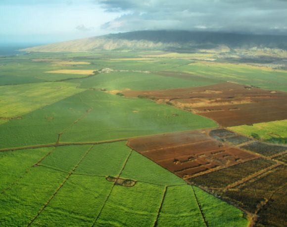 HAWAI'I'S FIGHT AGAINST GMOS RAGES ON