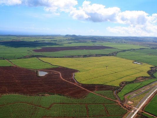 Hawaii used as Monsanto GE testing site