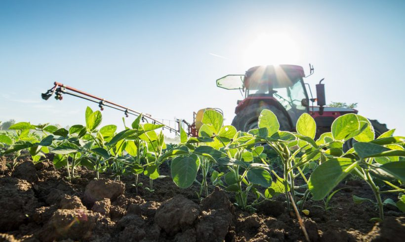 Monsanto's Panicked Farmers Use Illegal Herbicide to Battle Resistant 'Superweeds'