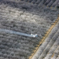 California Today: Cancer Worries Over a Common Weedkiller