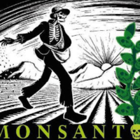 Monsanto in Mexico | Breaking News: Mexican Supreme Court Upholds Lower Court Ban on Transgenic Corn