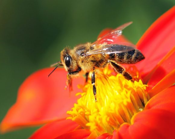 Neonicotinoid pesticides are slowly killing bees