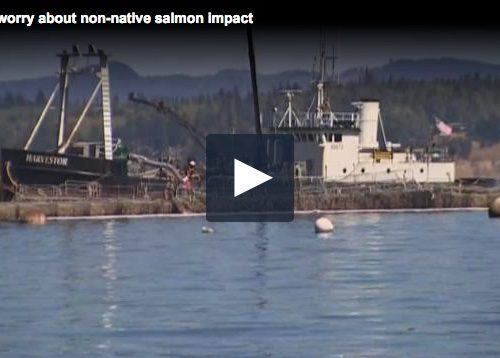 Tribes worry about environmental toll from salmon spill