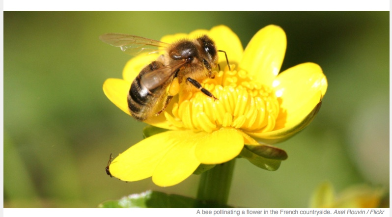 French Court Temporarily Bans Two Pesticides Over Possible Threat to Bees