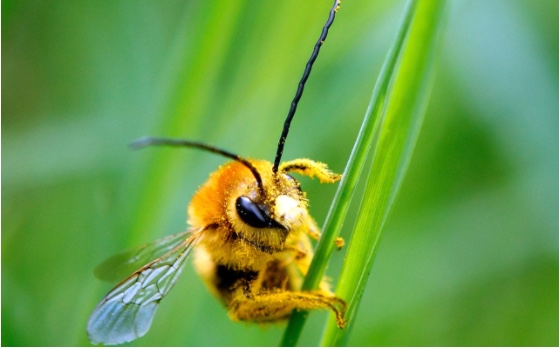 Keepers warn of 'bee-mageddon' after France authorises controversial insecticide