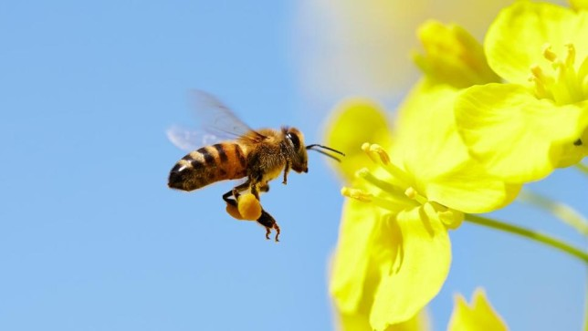 French Beekeepers Accuse Bayer after Glyphosate Found in Honey